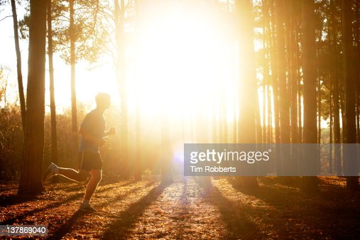 Male athlete running in woods with sun. : Stock Photo