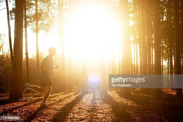 Male athlete running in woods with sun.