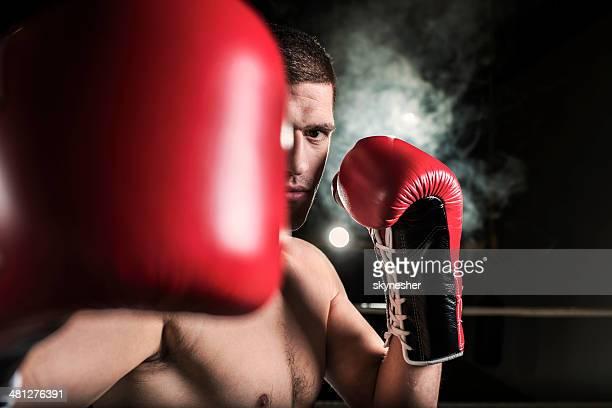 Male boxer.
