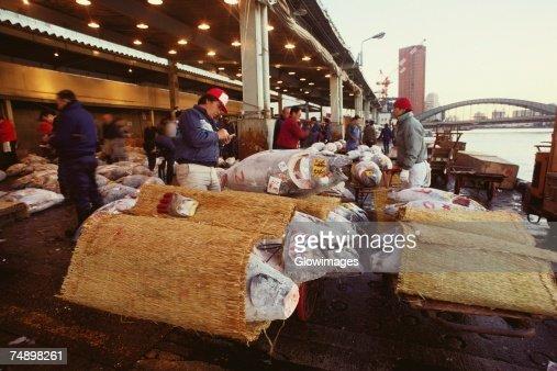 Male buyers inspecting tuna in a fish market, Tsukiji Fish market, Tsukiji, Tokyo Prefecture, Japan