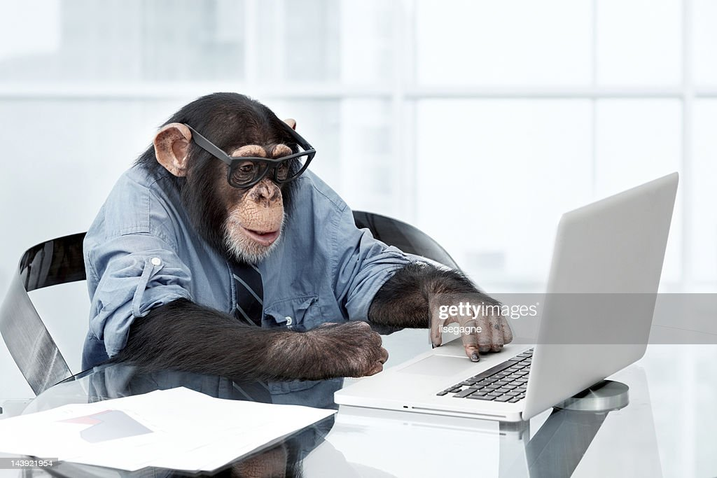 Male chimpanzee in business clothes : Stock Photo