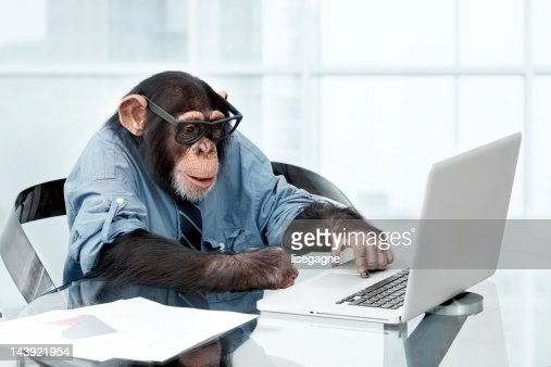 Male chimpanzee in business clothes : Stockfoto