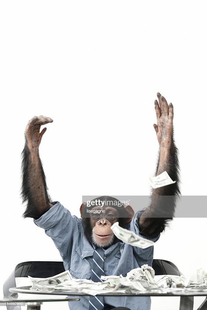Male Chimpanzee throwing cash : Stock Photo