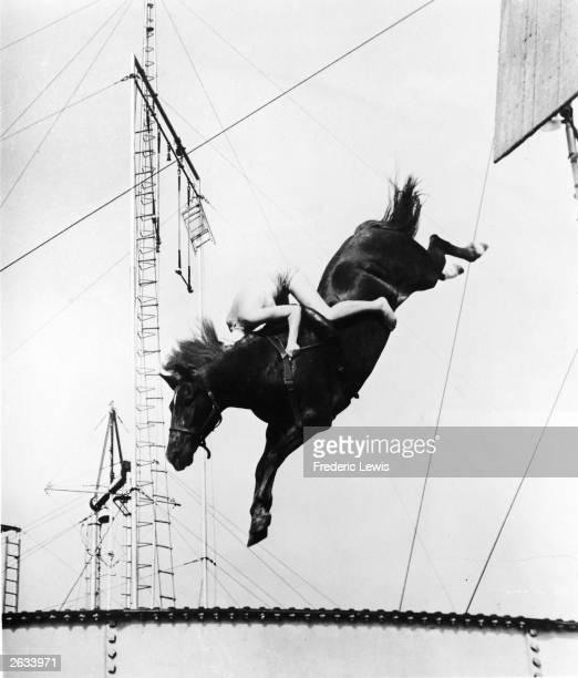A male circus performer holds tight while riding atop a horse for a stunt highdive into a swimming pool 1930s