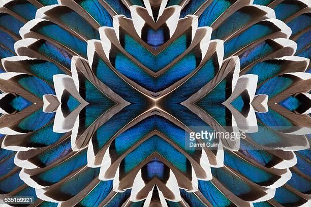 Male, Drake, Mallard Wing Pattern Design