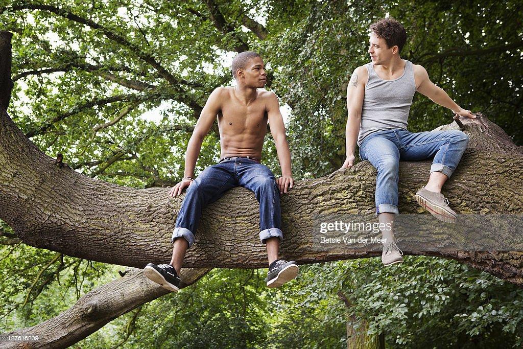 Male friends sitting in tree. : Stock Photo