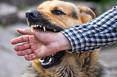 A male German shepherd bites a man by the hand.