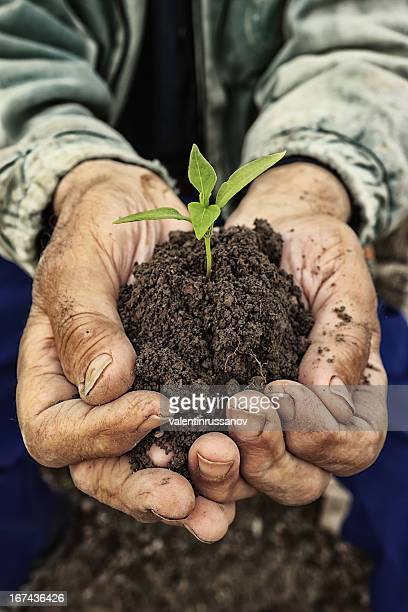 Male hands holding a plant