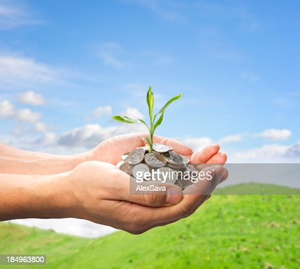 male hands holding coins and small plant