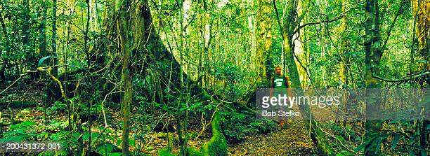 Male hiker walking in rainforest