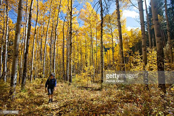 A male hikes through glowing Aspen trees on a sunny fall day in Colorado.