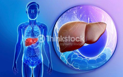 Männliche Leber Anatomie Stock-Foto | Thinkstock