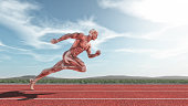 Male muscular system running on red track . This is a 3d render illustration