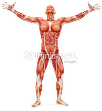 Männlichen Muskelskelettsystems Stock-Foto | Thinkstock