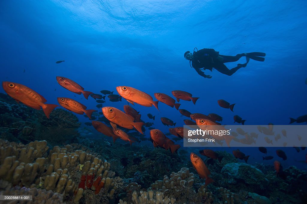 Male scuba diver and school of crescent-tailed bigeye, underwater view