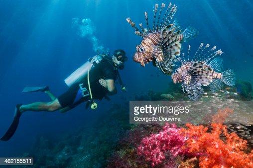 Male scuba diver with lionfish
