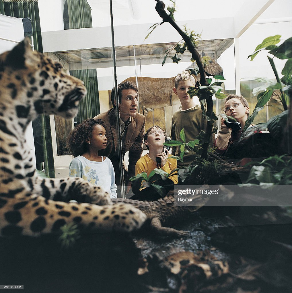 Male Teacher and Primary School Students in a Museum Looking at Animal Models in a Vitrine : Stock Photo