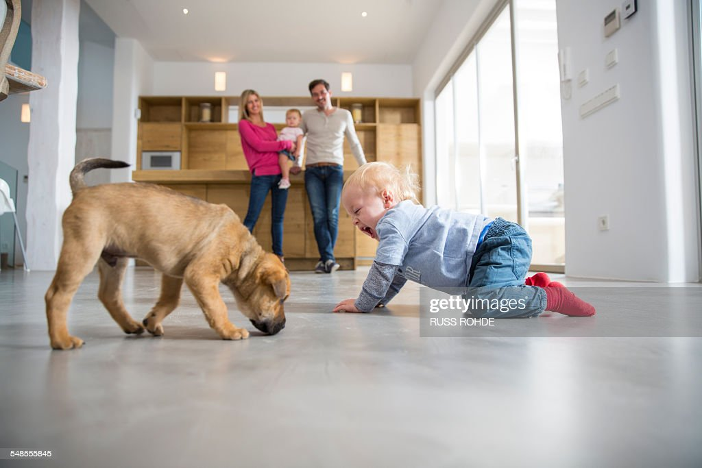 Male toddler playing with puppy on dining room floor : Stock Photo