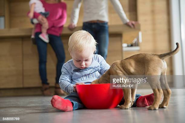 Male toddler watching puppy feeding from bowl in dining room