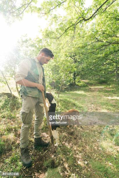 Male truffle hunter in 20's collects truffles in the woods with his two dogs on a summer day, Abruzzo, Italy, Europe