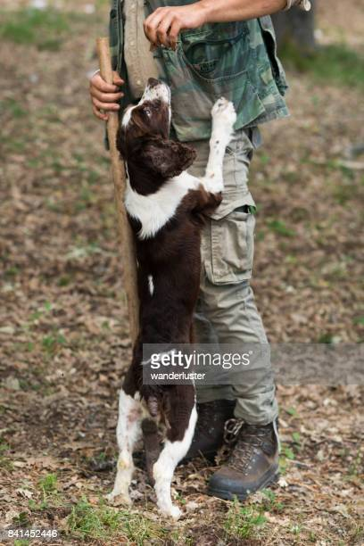 Male truffle hunter in 20's rewards his Springer Spaniel with a dog biscuit treat for finding a truffle in the woods on a summer day, Abruzzo, Italy, Europe