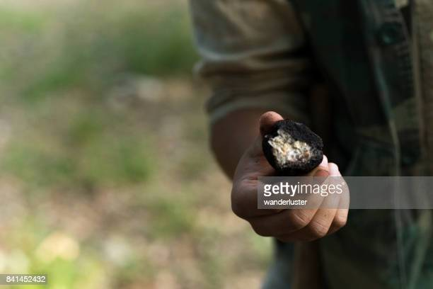 Male truffle hunter in his  20's breaks open a rotten truffle with a white center in the woods on a summer day, Abruzzo, Italy, Europe