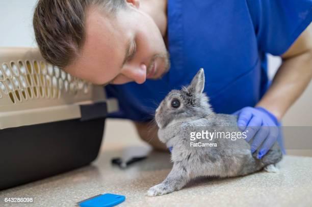 Male veterinarian helping adorable bunny