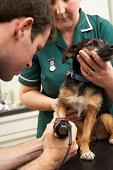 Male Veterinary Surgeon And Nurse Examining Dog In Surgery