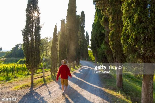 Male walker on dirt track lined with cypress trees, Tuscany, Italy