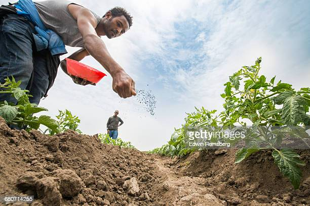 Male worker spreading fertilizer