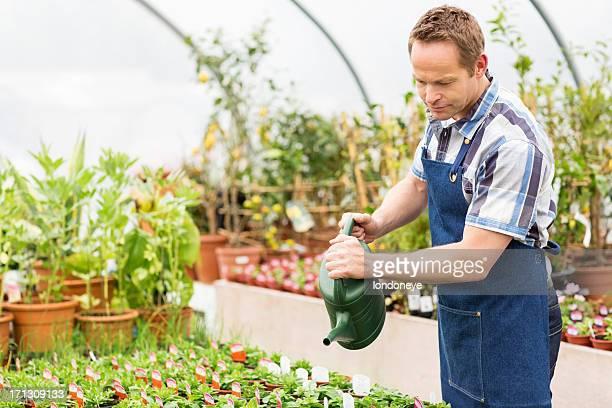 Männliche Arbeitnehmer gießen Pflanzen