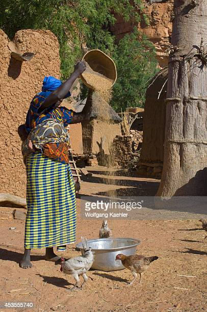 Mali Near Bandiagara Dogon Country Songho Dogon Village Woman Separating Millet Husks From Grains