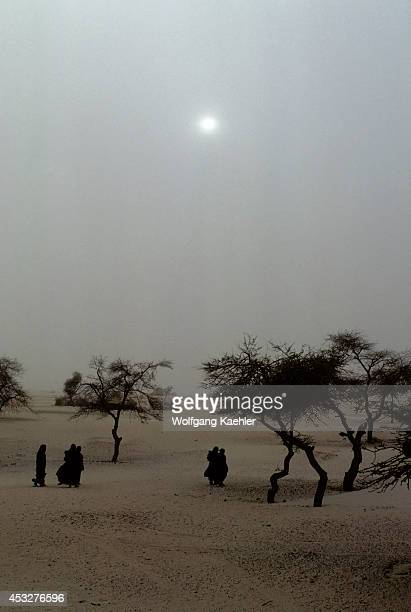 Mali Near Timbuktu Tuareg Camp In Harmattan Dust Storm