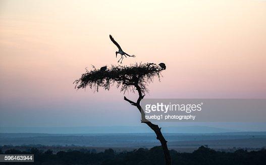 Malibu Stork early morning