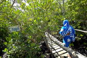 A photo taken 19 May 2007 shows a visitor taking a boardwalk through a mangrove forest a commercial selfhelp intiative by the women at Gazi to aid...