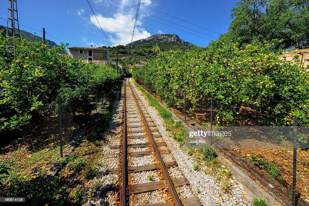 Mallorca, Spain, Citrus Gardens On The Way To Port Sallor : Stock Photo