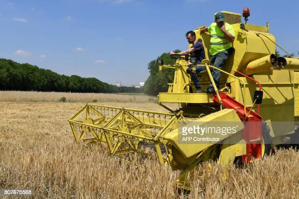 Malting barley is harvested for the first time at the Bois de Vincennes on July 4 in Paris / AFP PHOTO / ALAIN JOCARD