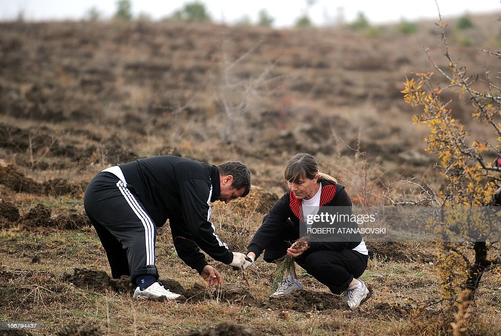 """A Man and a woman plant a tree on a hill slope near Skopje on November 21, 2012. Macedonia is planting today about 3 million trees throughout the country under the motto """"Tree Day - Plant Your Future'."""