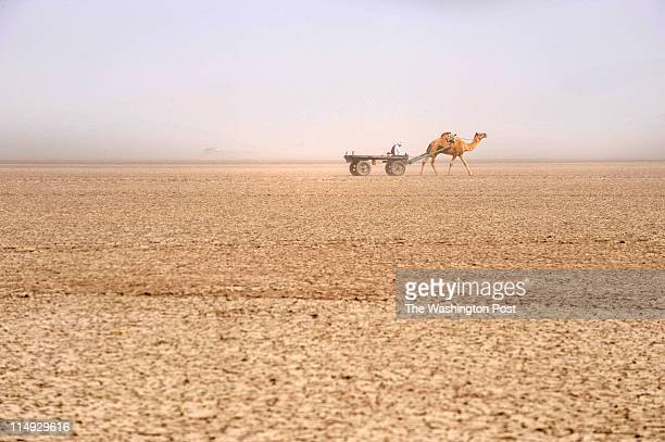 A man and camel huddle their way through a dust storm on the Little Rann of Kutch