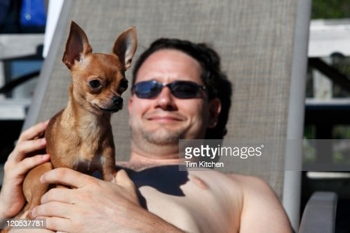 Man and chihuahua  relaxing on sun lounge chair : Foto de stock