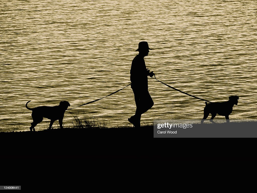 Man and dogs : Stock Photo