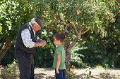 Man and grandson picking fruit