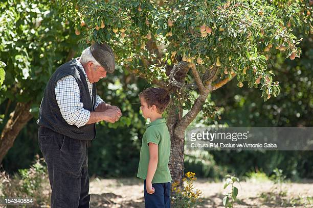 Man and grandson picking fruit
