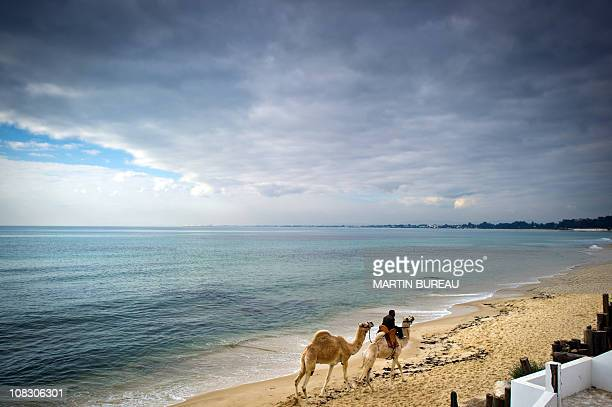 A man and his camels walk along the beach of Hammamet some 60 kms southeast of Tunis on January 19 2011 Hundreds of people protested in the centre of...