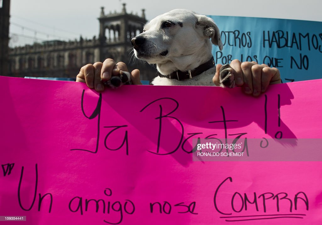 A man and his dog take part in a protest after the police caught dozens of stray dogs thought to be involved in the death of four people in Mexico City, on January 12, 2013. Animal rights activists have voiced doubts that dogs are to blame for the death of at least four people in a country torn by runaway crime, but prosecutors insist that only canines could have caused such carnage, with bones exposed and body parts bitten off. Hundreds of Mexico City residents took their dogs to mobile sterilization units Thursday as the city stepped up a campaign to reduce the number of street dogs after a string of deadly attacks. The city prosecutor's office said stray dogs mauled four people to death, and perhaps two more victims, in the past two weeks. AFP PHOTO/RONALDO SCHEMIDT