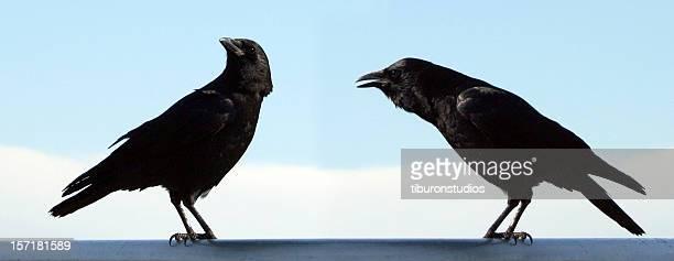 Mann und Frau Bird?