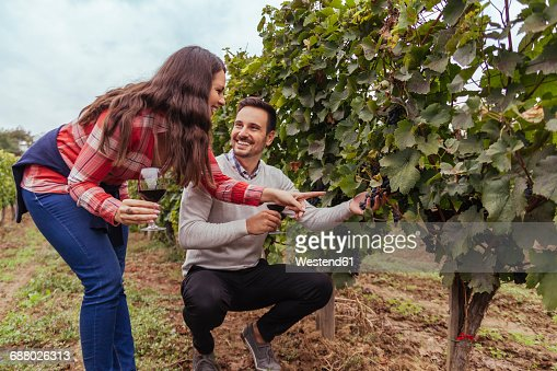Man and woman in a vineyard checking grapes