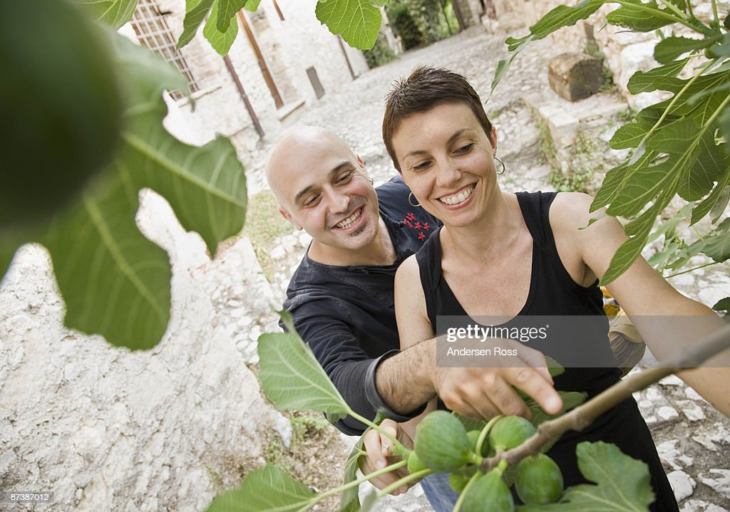 Man and woman picking figs : Stock Photo