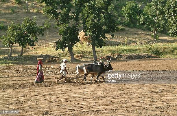 Man and woman plowing and sowing in field, Rajasthan,India