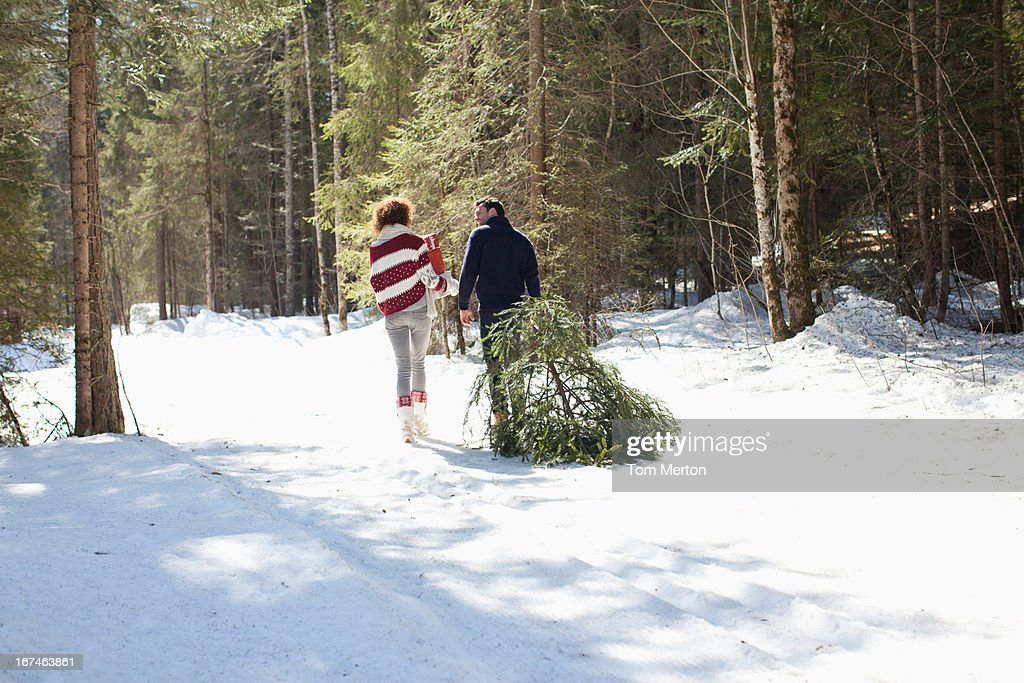 Man and woman with fresh cut Christmas tree : Stock Photo